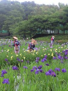 2010年6月15日横須賀菖蒲園6