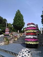 山下公園スペイン風階段の花