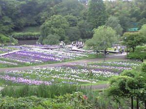 2010年6月15日横須賀菖蒲園7