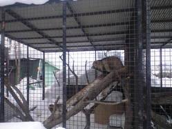 2010年2月8日アライグマ