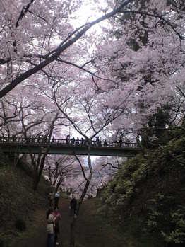 2010年4月11日高遠城址公園橋