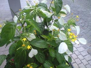 2010年7月1日モトマチの花
