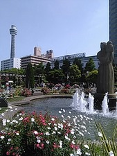 山下公園のバラとマリンタワー