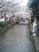 2007april6息子から京都の桜