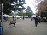 2008年11月9日 正倉院展の行列