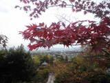 2008年11月10日永観堂多宝塔より
