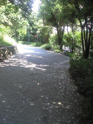 2009年8月25日百日紅の道