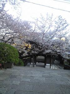 2011年4月13日お寺山門桜
