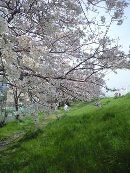 2010年4月6日多摩川右岸土手2