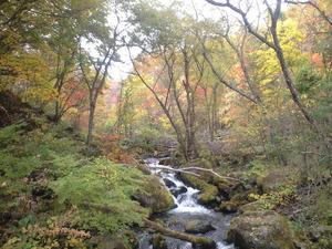 2010年10月17日自然園渓谷