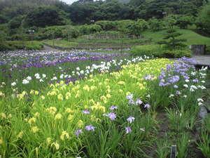 2010年6月15日横須賀菖蒲園4