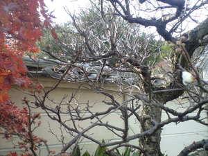 2009年12月28日紅葉と梅