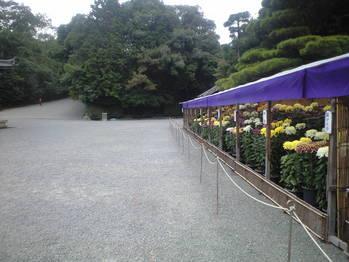 2009年10月24日泉湧寺菊花展