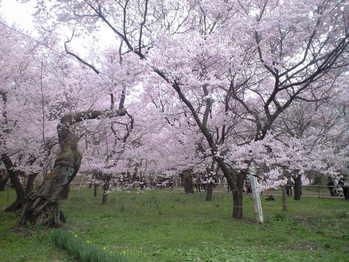 2010年4月11日高遠城址公園1