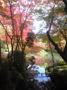 2010年11月17日府立植物園