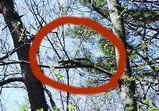 2006GW樹上のリス