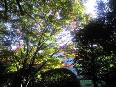 2009年11月18日東博の庭の紅葉