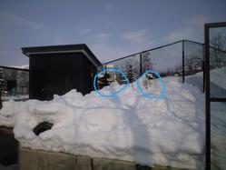 2010年2月8日北極狐種明かし