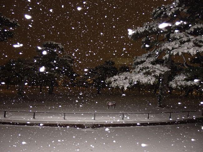 雪の皇居外苑の松(フラッシュ)