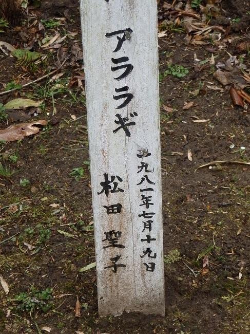 アララギ(松田聖子)2