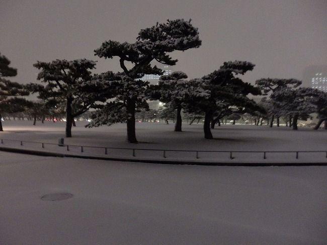雪の皇居外苑の松