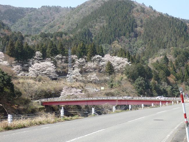 淡墨桜へ続く橋