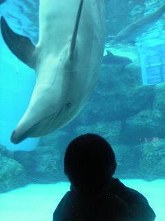 イルカとお話
