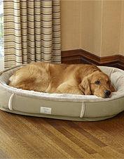 蓄熱暖房と犬