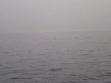 2008/05/22 イルカ2