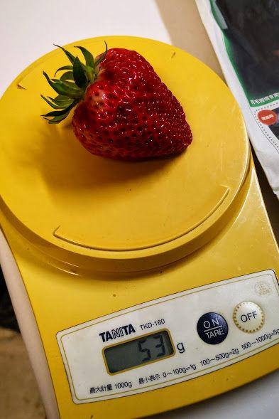 0523巨大イチゴ