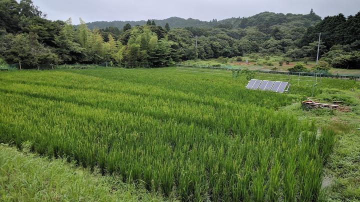 0727田んぼ全景