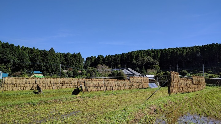 1231農場