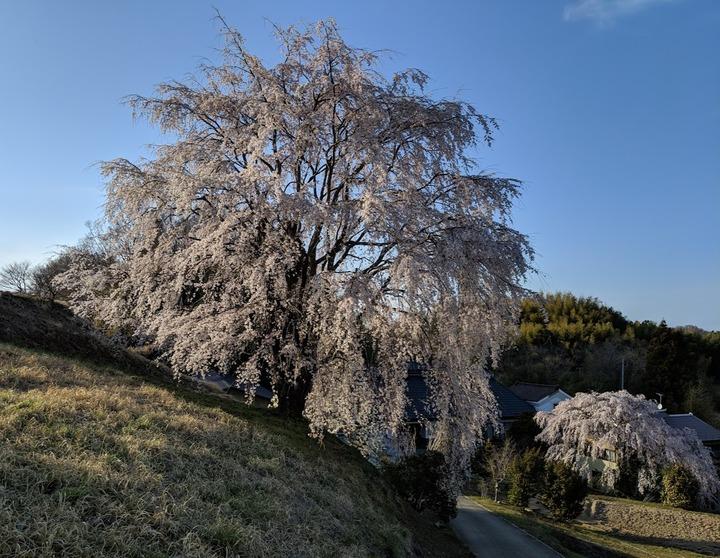 0418滝桜周辺2