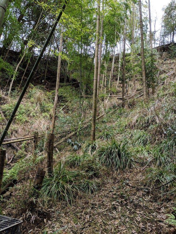 0216竹やぶを見上げる
