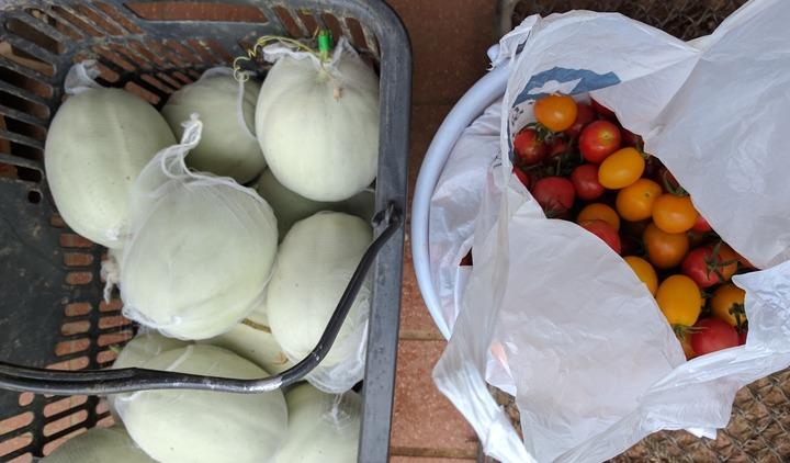 0729初夏の収穫