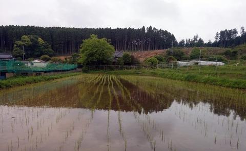 0515田の草取り1.jpg