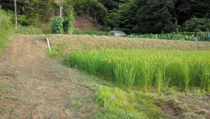 0805草刈り完了.jpg