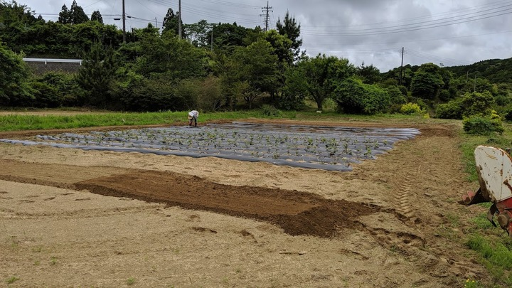 0605芋畑