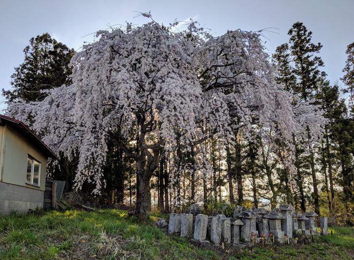 0418滝桜周辺3