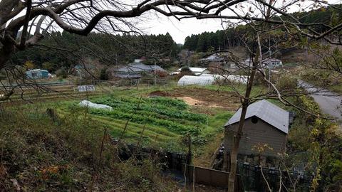 1122山から畑を見る.jpg