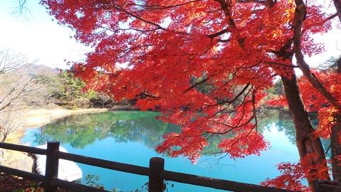 1105五色沼の紅葉.jpg