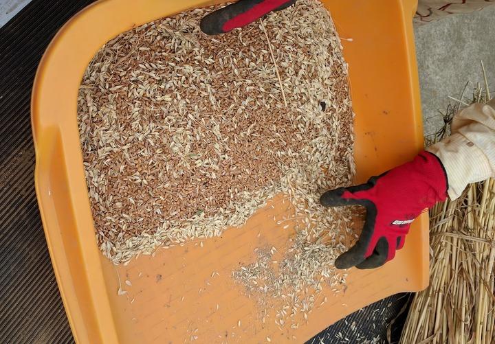 0617小麦脱穀2