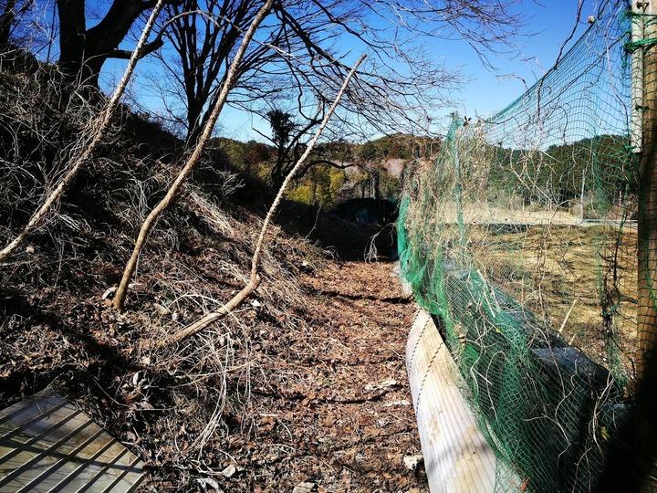 0222柴刈り2