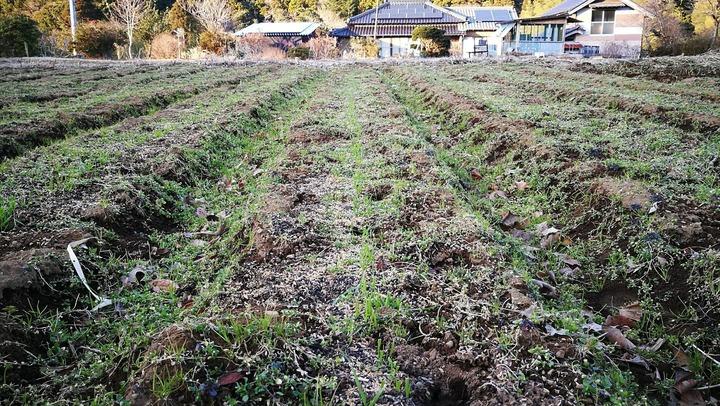 0107小麦畑