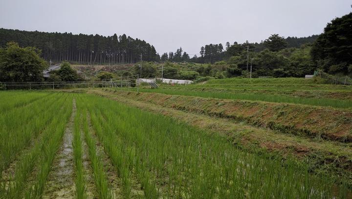 0704草刈り後の田んぼ.jpg