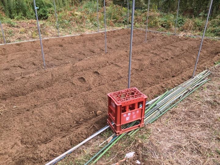 1011かぼちゃハウス畑