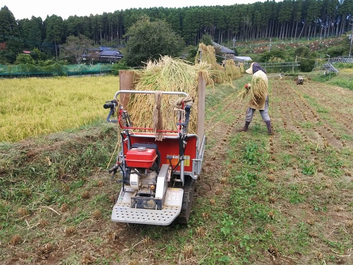 0910イネ刈り2.jpg