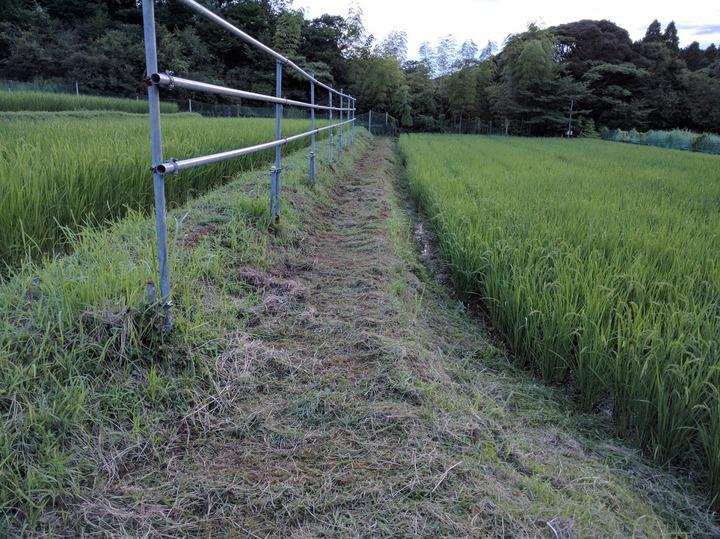 0803草刈り2.jpg