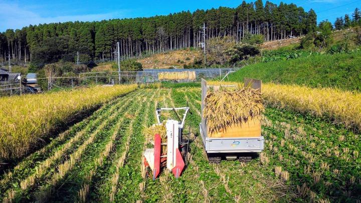 0331収穫