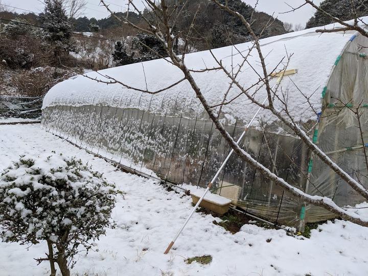 0211ハウスの雪落とし1